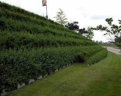 Jardines verticales monterrey fachada vegetal sistemas for Muro verde sistema constructivo