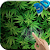 Marijuana 3D Live Wallpaper HD file APK for Gaming PC/PS3/PS4 Smart TV