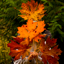 Fall Leaves by Janet Gilmour-Baker - People Family ( fall colors, colorful, family, vancouver island, fall, leaves, people )