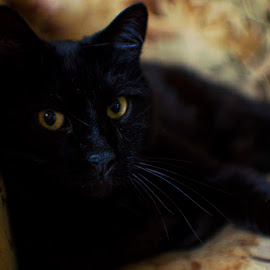 by Tim Williams - Animals - Cats Portraits