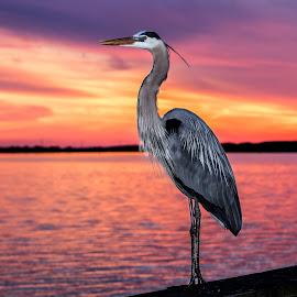 by Rick Crandall - Animals Birds