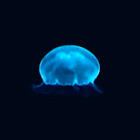 JellyFish(Free) icon