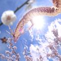 Sakura Dragon Sun