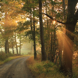 Autumn Light by Aaron Shaver - Landscapes Forests ( warm, forest, road, beauty, landscape, rays, sun, nature, fog, autumn, trail, beams, fall, path, trees, light, mist )