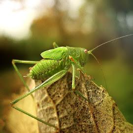 by Ksenija Glavak - Animals Insects & Spiders