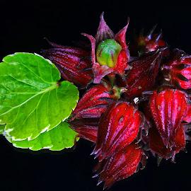 Hibiscus subdarifa #2 by Asif Bora - Food & Drink Fruits & Vegetables