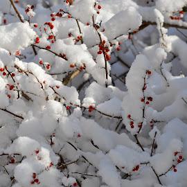 Winterland by Plamen Valkovski - Landscapes Weather