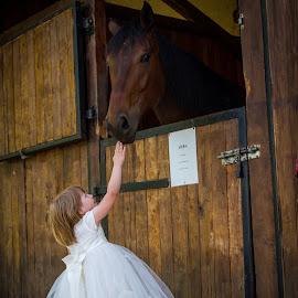 Little Princess by Alexandru Breaz - Babies & Children Children Candids ( children princess horse dress little girl )