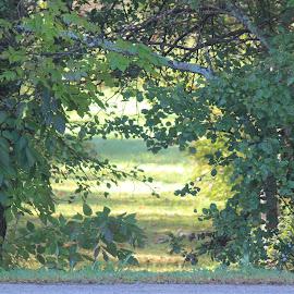 by Samantha Zimmer - Nature Up Close Trees & Bushes