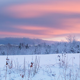 sky blue pink by Shelby Taylor - Landscapes Prairies, Meadows & Fields ( field, winter, sky, sunset, twighlight )