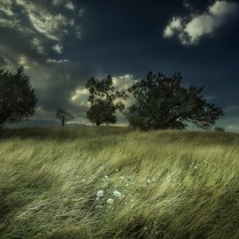 Wuthering Heights  by Andrei Grososiu - Landscapes Prairies, Meadows & Fields ( wind, grass, romania, drama, prairie, pestera )