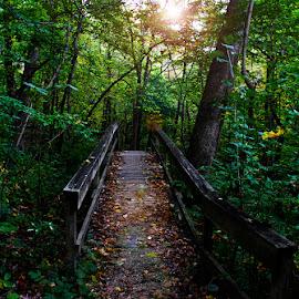 by Jessyka Kaskie - Landscapes Forests ( path, nature, landscape )
