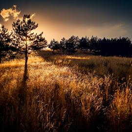 suny grass by Petar Boskovski - Landscapes Mountains & Hills