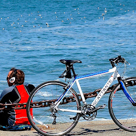 Biking the Bay by Barbara Brock - Transportation Bicycles ( bike, bay, san francisco bay, earphones, ocean sea birds, bicycle )