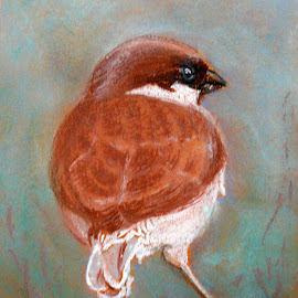 Sparrow by Artica Arta - Painting All Painting ( pastel, painting, birds,  )