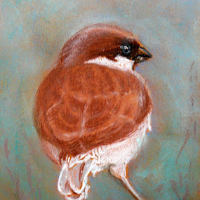 Sparrow by Jasna Dragun - Painting All Painting ( pastel, painting, birds,  )
