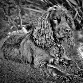 COCO by Brian Noel - Animals - Dogs Puppies
