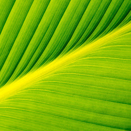 Green Leaf by Chin KC - Abstract Patterns ( abstract, macro, texture, green, leaf,  )
