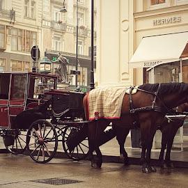 Street in Vienna by Sander Kleinberg - City,  Street & Park  Historic Districts ( vienna, street )