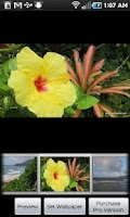 Screenshot of Kauai Flowers