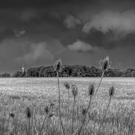 Imminent Storm in B&W by Denny Betts - Landscapes Weather ( clouds, wheat, thistle, thunderstorm, wind turbine, black and white, cloudscape, storm clouds, landscape, storm, fields,  )
