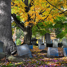 Autumn Glow by Brooks Travis - City,  Street & Park  Cemeteries ( spruce, roots, deciduous, cemetery, moss, grave, leaves, trunk, hard wood, tree, head stone, autumn, foliage, 1800's, bark, october )