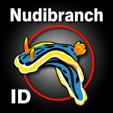 Nudibranch ID Indo Pacific