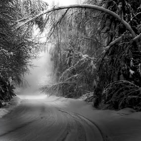 Snow covered woods and forest road. by Per-Ola Kämpe - Black & White Landscapes ( b&w, winter, snow, forest, road, woods, black and white, landscape,  )