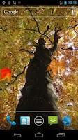 Screenshot of Autumn Maple Live Wallpaper