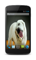 Screenshot of Labrador Licks Screen LWP