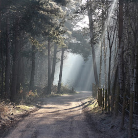 One Cold Morning by Steve Cowling - Landscapes Forests ( hawley woods, steve cowling, cold, path, light )