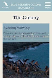Oamaru Blue Penguin Colony - screenshot