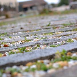 Path by Tacito Alexandro - Nature Up Close Gardens & Produce