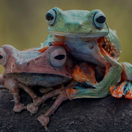 by Ajar Setiadi - Animals Amphibians