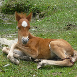 cute by Shilpa Armo - Animals Horses ( baby, young, animal,  )