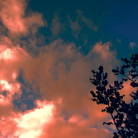 Holly in the Evening by Ian Thompson - Landscapes Cloud Formations ( plant, clouds, nobody, uk, holly, west yorkshire, botany, flora, united kingdom, colours, sky, flowers & plants, colourful, nature, blue, yorkshire, no people, sunset, outdoor, cloud, cloudy, light, outside )