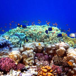 Underwater party by Dori Ta - Landscapes Underwater (  )