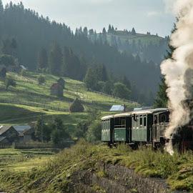 Mocănița 'Huțulca', Moldovița by Zencenco Cristian - Transportation Trains ( transportation )