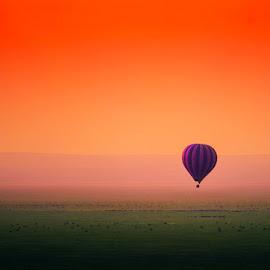 Beauty Ballon and Beasts by Marc de Chalain - Landscapes Prairies, Meadows & Fields ( colour, dawn africa, colourful, serengeti, plains, beauty, africa,  )