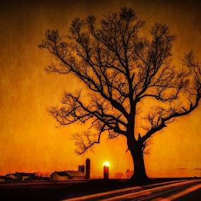 Lancaster Orange by Linda Karlin - Landscapes Sunsets & Sunrises ( tree, nature, sunset, landscape )