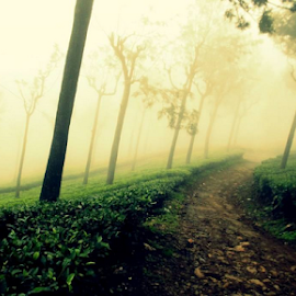 Mis of Tea Garden by Nitin Agarwal - Landscapes Mountains & Hills (  )