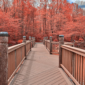 Ruby Meadowlark Bridge by Nicolas Raymond - City,  Street & Park  City Parks ( railing, wood, rails, wide-angle, vibrant, architecture, travel, leaves, botanical, boardwalk, colour, sky, colourful, nature, passage, foliage, maroon, pink, walkway, virginia, surreal, black, orange, structure, grass, colors, white, forest, tourism, united states, somadjinn, colours, passageway, touristic, trees, scene, lines, bridge, america, colorful, ruby, overpass, vivid, plants, way, landscape, usa, fantasy, vienna, nicolas raymond, meadowlark gardens, path, cloudy, construction, clouds, planks, water, park, hdr, pathway, lush, bars, gardens, ethereal, scenic, woods, meadowlark, cyan, magenta, red, botanics, color, blue, wide angle, vibrance, background, brown, scenery, garden,  )
