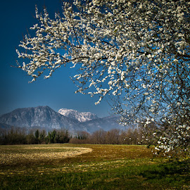 Spring by Luigi Esposito - Nature Up Close Trees & Bushes ( grassland, mountains, tree, flowers )