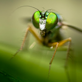 Macro by Nure Alahi Sagor - Animals Insects & Spiders