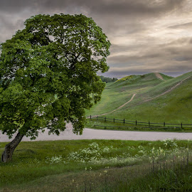 Back to Life by Shooting Wild - Landscapes Prairies, Meadows & Fields ( canon, tree, green, 60d, uppsala, gamla uppsala )