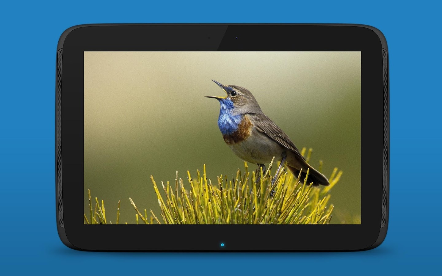 iKnow Birds 2 PRO - Europe Screenshot 15