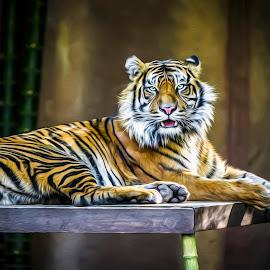Sumatran Tiger by Shannon Rogers - Digital Art Animals ( tiger, sumatran tiger )