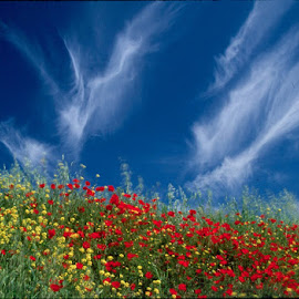 Colors of Tuscany. by Gale Perry - Landscapes Cloud Formations