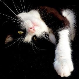 by Biljana Nikolic - Animals - Cats Portraits