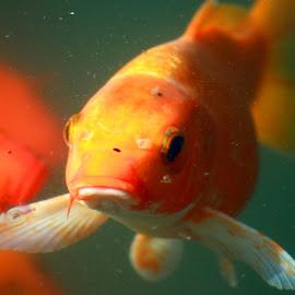 by Vijay Nagpure - Animals Fish